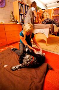 Hondenmassage 2