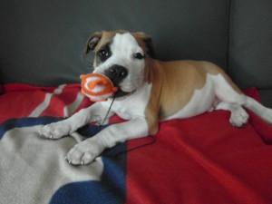 puppybegeleiding