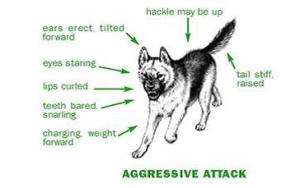 agressieve agressie