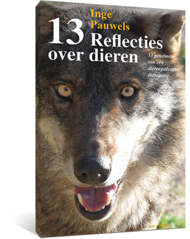 13-reflecties-over-dieren-cover-square