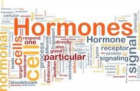 Hormonen huishouding
