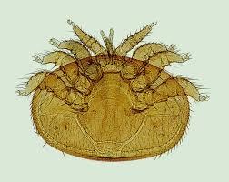 parasieten, teken en vlooien