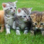 Gedragsproblemen en je kat: je bent niet alleen