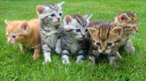 kitten - kittenparty