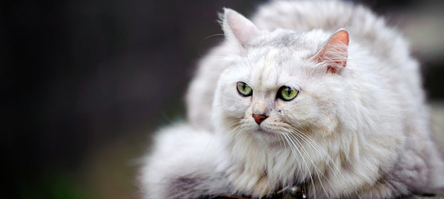 Katten hebben erg scherpe zintuigen