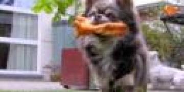 Hondenfluisteraar, hondentherapeut of hondentrainer?